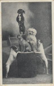 Trained dogs ,CHESTER DEPOT , Vermont , 1909 ; at the fair