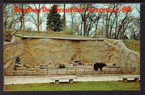 Bears,Henry Doorly Zoo,Omaha,NE