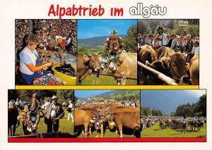 Alpabtrieb im Allgaeu Festival Cows Traditional Costumes