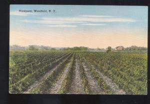 WESTFIELD NEW YORK VINEYARD FARMING GRAPES VINTAGE POSTCARD N.Y