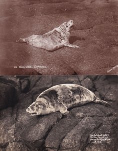 The Grey Seal Defiance Scilly 2x Old Real Photo Postcard s