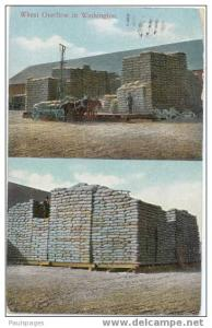Bagged Wheat Overflow in Washington, WA, 1910, Divided Back