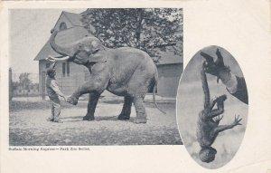 BUFFALO , New York , 1901-07 ; Elephant at Zoo