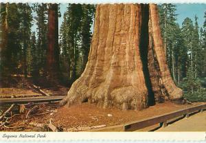 Tree Aged sequoia National Park Sentinel Tree The Village     Postcard  # 7004