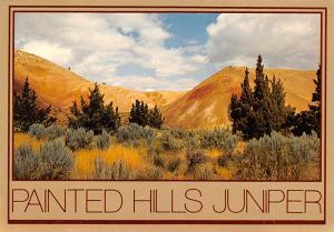 Painted Hills Juniper - Oregon