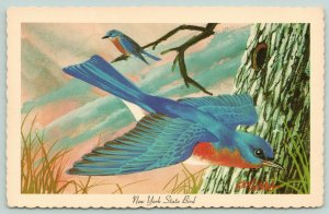 New York State Bird~Bluebird in Flight~Hole in Tree~Artist Ken Haag Series 1967