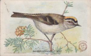 Golden Crowned Kinglet Trade, Trade Card - Arm & Hammer