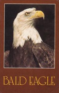 Bald Eagle Birds