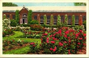 Vtg Postcard St Louis MO Missouri Botanical Garden Rose Garden UNP