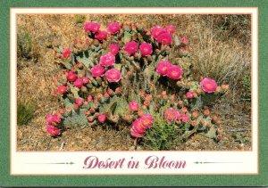 Arizona Desert Scene Beaver Tail Cactus
