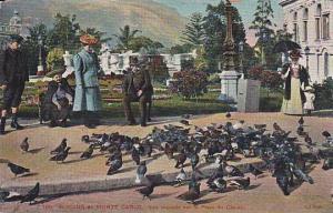 Jardins de Monte Carlo, Les pigeons sur la Place de Casino, 00-10s