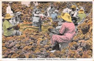 Nassau Bahamas Trimming Sponges Natives Antique Postcard K44445