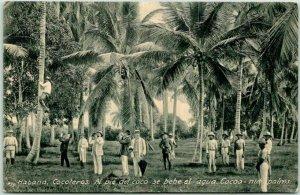 Vintage 1910s Havana, Cuba Postcard Habana, Cocoteros Cocoanut Palms Unused