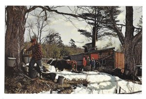New England Maple Sugar Time Sugar House Don Sieburg Photo Vtg Postcard