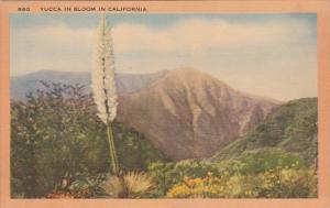 Cactus Yucca In Bloom In California