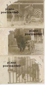 MEMPHIS, TENNESSEE ZOO ANIMALS-EARLY 1900'S-SET OF  3 RPPC REAL PHOTO P.C.