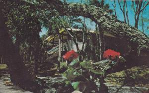 One of the landscape-blending cottages in Sea Pines Plantation,  Hilton Head ...