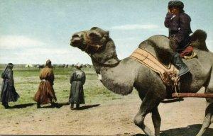 mongolia china, Native Mongolian Camel Driver (1946) Postcard
