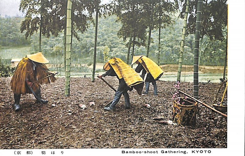 Japan Bamboo-shoot Gathering KYOTO people peasants working field forest