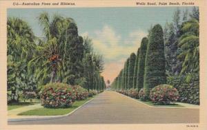 Florida Palm Beach Australian Pines and Hibiscus Along Wells Road Curteich
