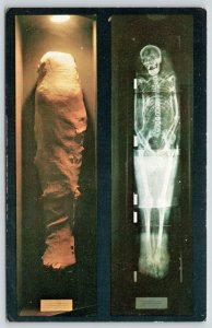 St Louis Missouri~Museum of Science & Natural History~X-Rayed Mummy~1950s