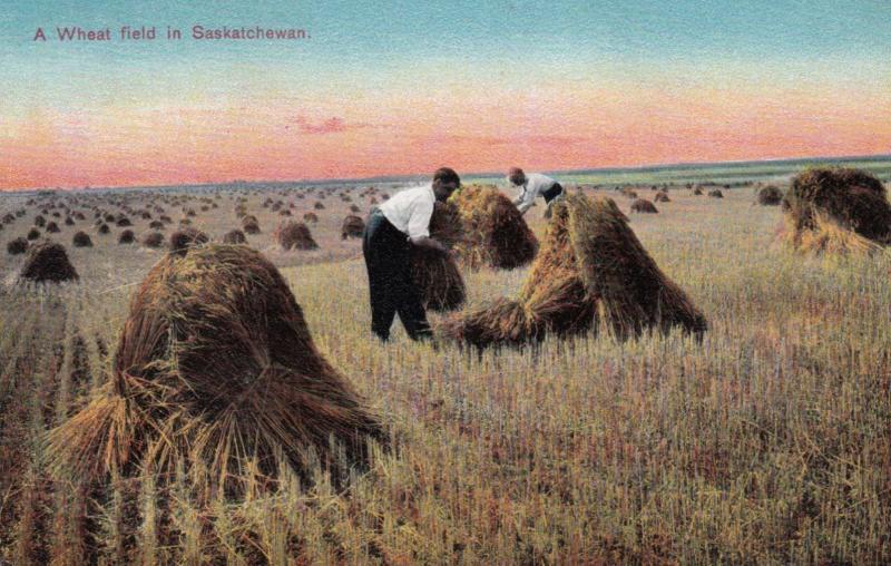 SASKATCHEWAN, Canada, 00-10s, Men Working on a Wheat Field