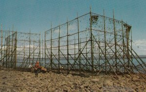 Bay of Fundy , Nova Scotia , 1950-60s ; Fish Weir , Low Tide
