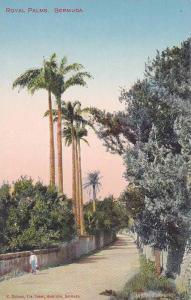 Dirt road, Royal Palms,   Bermuda,  00-10s