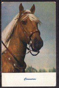 Cimmaron,Horse BIN