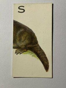 CIGARETTE CARD - WILLS ANIMALLOYS #27 S  (UU155)