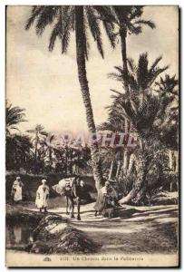 Old Postcard A Path in the Palmeraie Camel