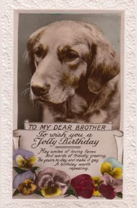 Dog Birthday Greetings , 00-10s