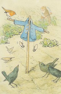 The Tale Of Peter Rabbit Beatrix Potter Jacket 1902 Book Postcard