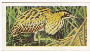 Trade Card Brooke Bond Tea Wild Birds in Britain 35 Bittern