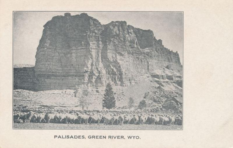 Sheep Herd at the Palisades - Green River WY, Wyoming - UDB