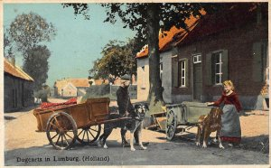 Netherlands Dogcarts in Limburg Holland Postcard