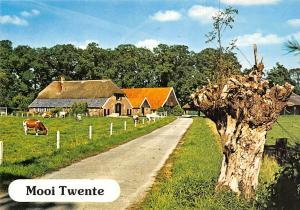 Netherlands Mooi Twente Haus Houses Cows Animals