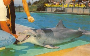 Marineland of the Pacific, CA Flipper the Talking Dolphin ca 1960s Postcard