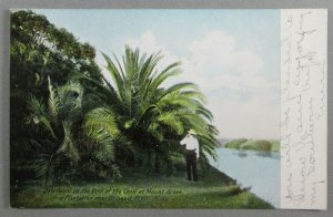 Date Palms On Bank Of Canal, Mount Grove Plantation, Ormond FL Postcard (#6811)