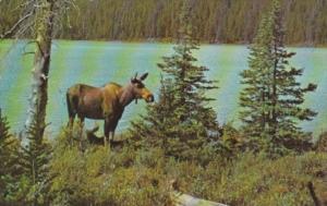 Canada Greetings From Cranbrook British Columbia 1969