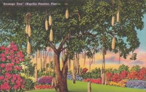Sausage Tree In Florida