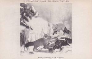 New York Buffalo A Mammal Group Hall Of The Niagara Frontier Buffalo Museum O...