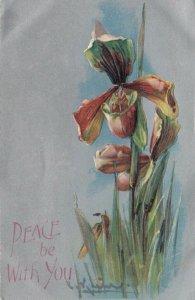 Artist KLEIN ; Iris Flowers , 1915