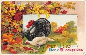 Thanksgiving~Turkeys in Meadow~Autumn Leaves Pumpkin~Red Indian Corn~R Veenfliet