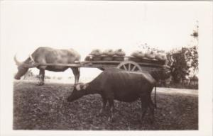 Philippines Typical Ox Cart Real Photo