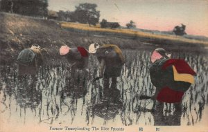 Farmers Transplanting Rice Sprouts, Japan, Early Hand Colored Postcard, Unused