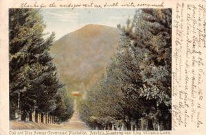 South Africa Oak and Pine Avenue Government Plantation Amatola Mountains