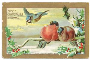 Winter Birds Holly Branch Blue Jay Gold Gilt 1911 Vintage Christmas Postcard