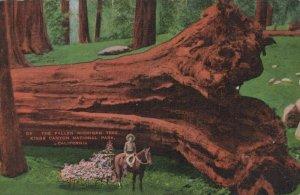 The Fallen Michigan Tree Posted California Linen Vintage Postcard