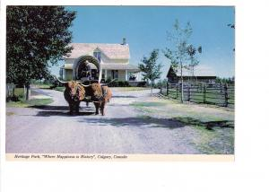 Oxen Pulling Covered Wagon, Heritage Park, Calgary, Alberta,